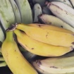 Locally Grown Bananas Return To SoCal After 18-Year Absence