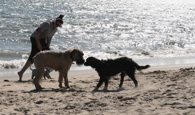 dog-beach.jpeg