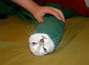 kitten-burrito-in-a-spinach-tortilla.jpg