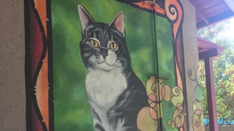 Room 8, The Cat That Adopted An Echo Park School, Died 50 Years Ago Today
