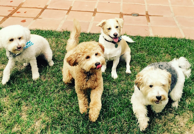 emily_dogs.JPG