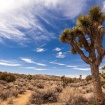 The Cost Of Visiting Joshua Tree National Park Could Nearly Triple