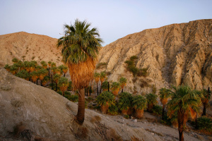 Part Of The San Andreas Fault Is Moving Way Faster Than We Previously Thought