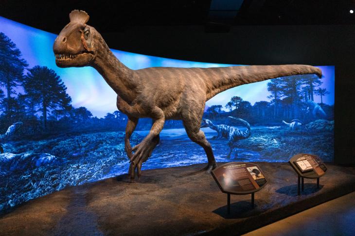 Frozen Dinosaur Found 2011
