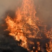 Have Questions About The Wildfires? We'll Answer Them