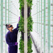 The Farm Of The Future Might Be In Compton. Inside A Warehouse. And Run Partly By Robots