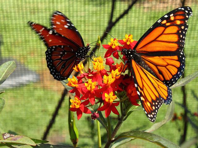 butterfly_pavilion.jpg