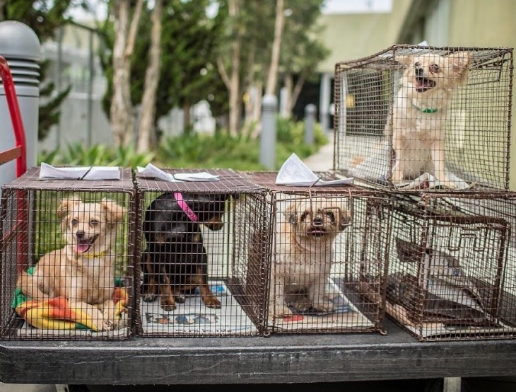 la city animal shelters are full hundreds of dogs cats and rabbits
