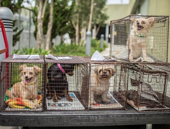 LA City Animal Shelters Are Full. Hundreds Of Dogs, Cats And Rabbits Could Be Euthanized