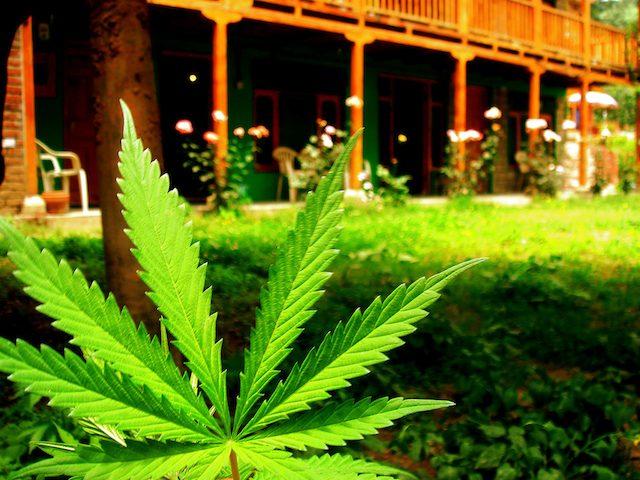 ab390-marijuana-bill.jpg