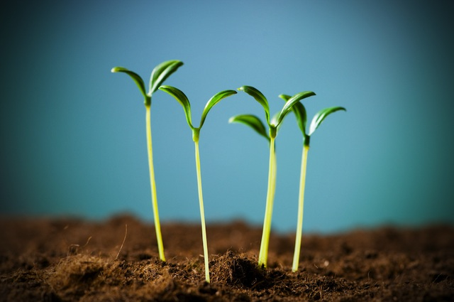 seedling-dirt-growing.jpg