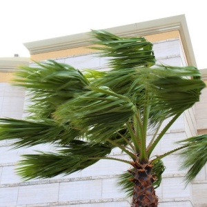 That Crazy SoCal Wind Knocked Down Trees And Tens Of Thousands Are Without Power