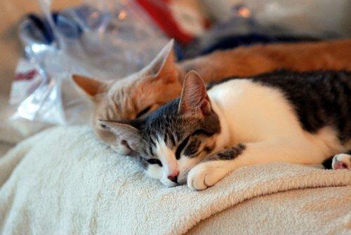 evil unsafe kitties