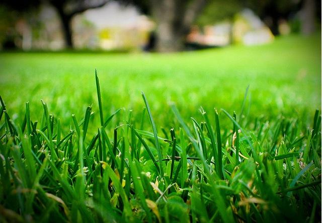 green-grass-homes.jpg