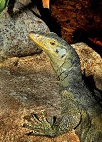 la_zoo_lizard.jpg