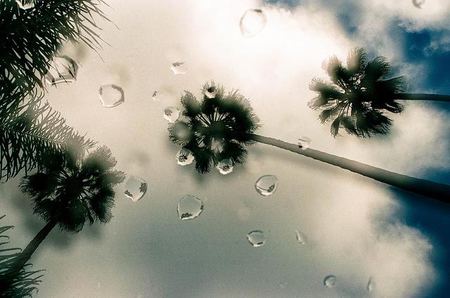 rain-palm-trees.jpg