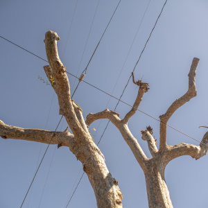SoCal Edison Is Cutting Your Trees And There's Not Much You Can Do About  It