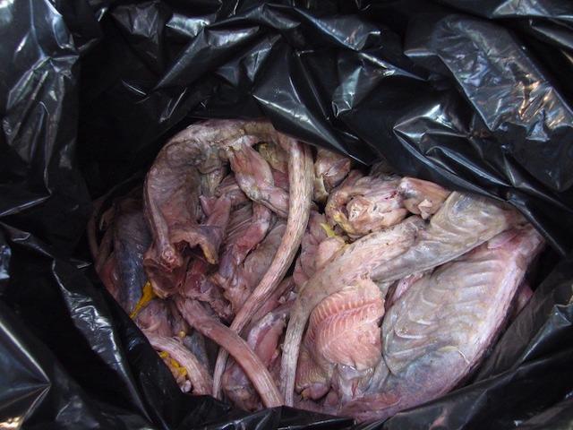 border-patrol-iguana-meat.jpg